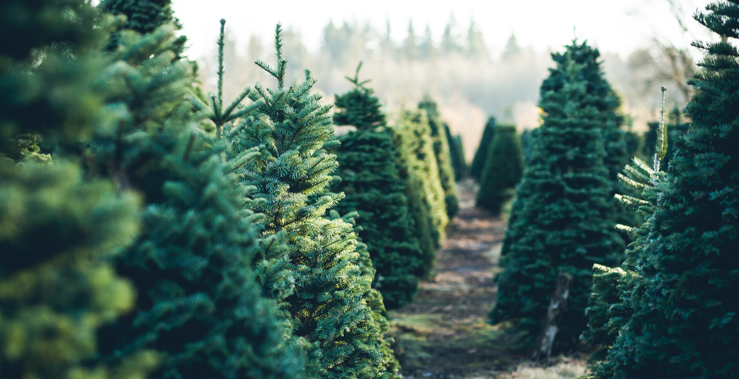 9 places to get a real Christmas tree around Vancouver