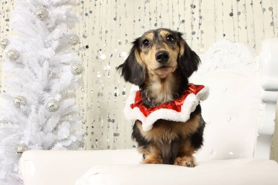 Here's where you can get a professional holiday photoshoot for your pet