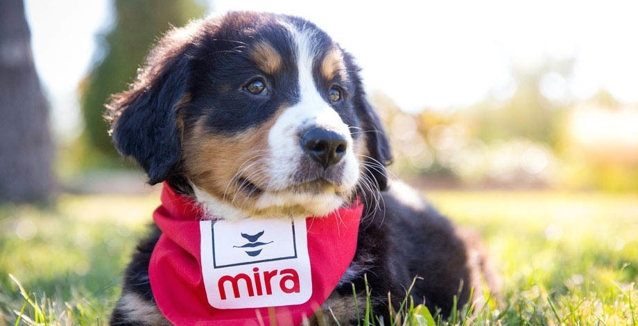 The Montreal Canadiens to become foster family for service puppy