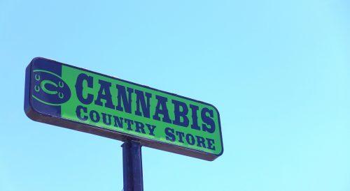 cannabis exports