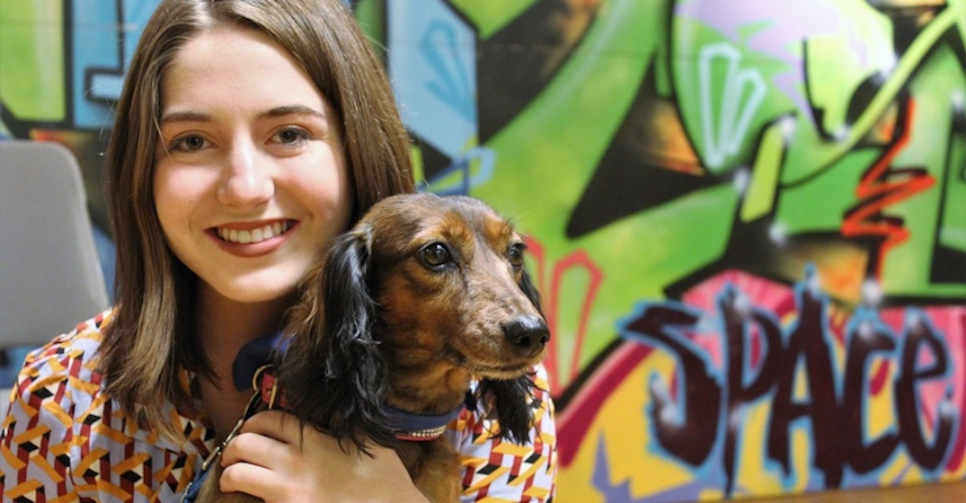 U of C to see dogs, free massages and cookies for SU StressLess Week