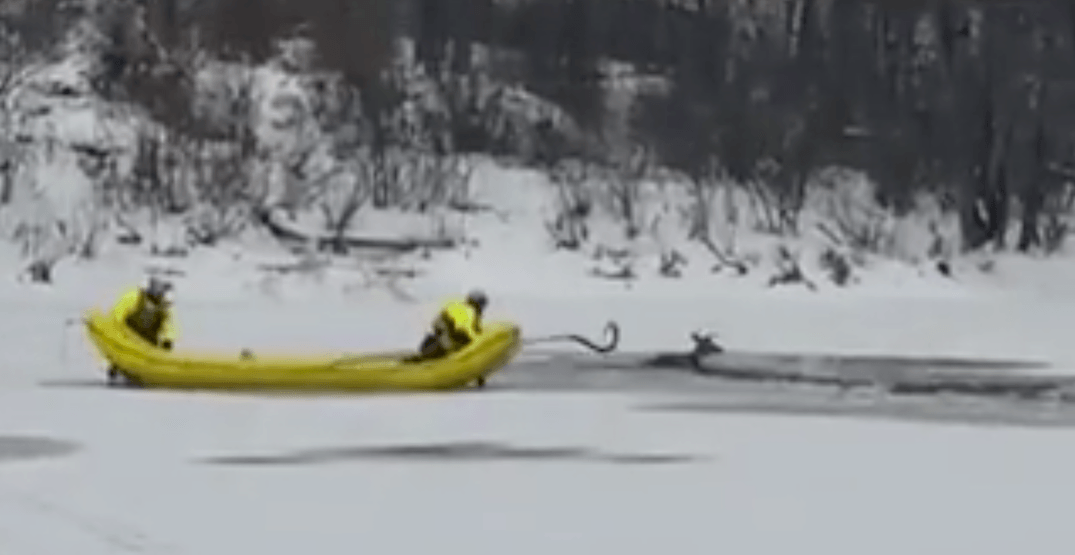 Heroic rescue of deer trapped in icy Ontario river captured on camera (VIDEOS)