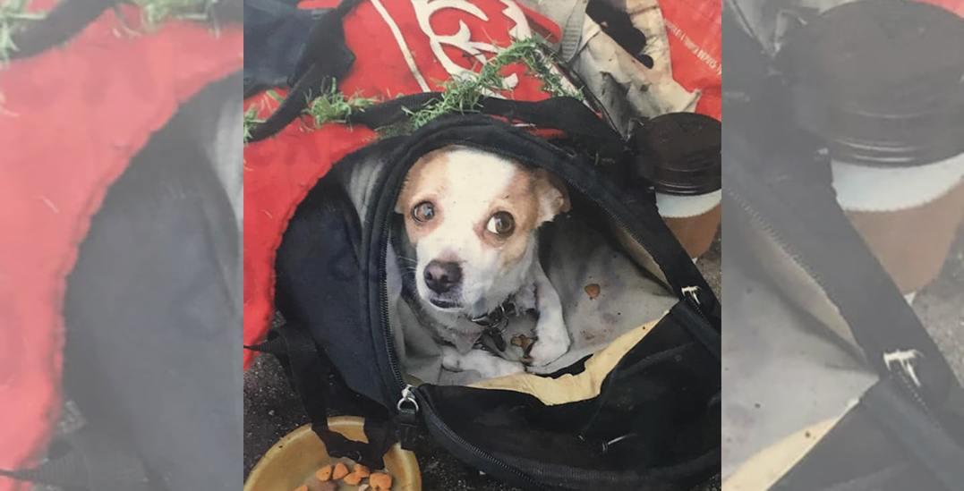 Reward offered for safe return of dog stolen from disabled man