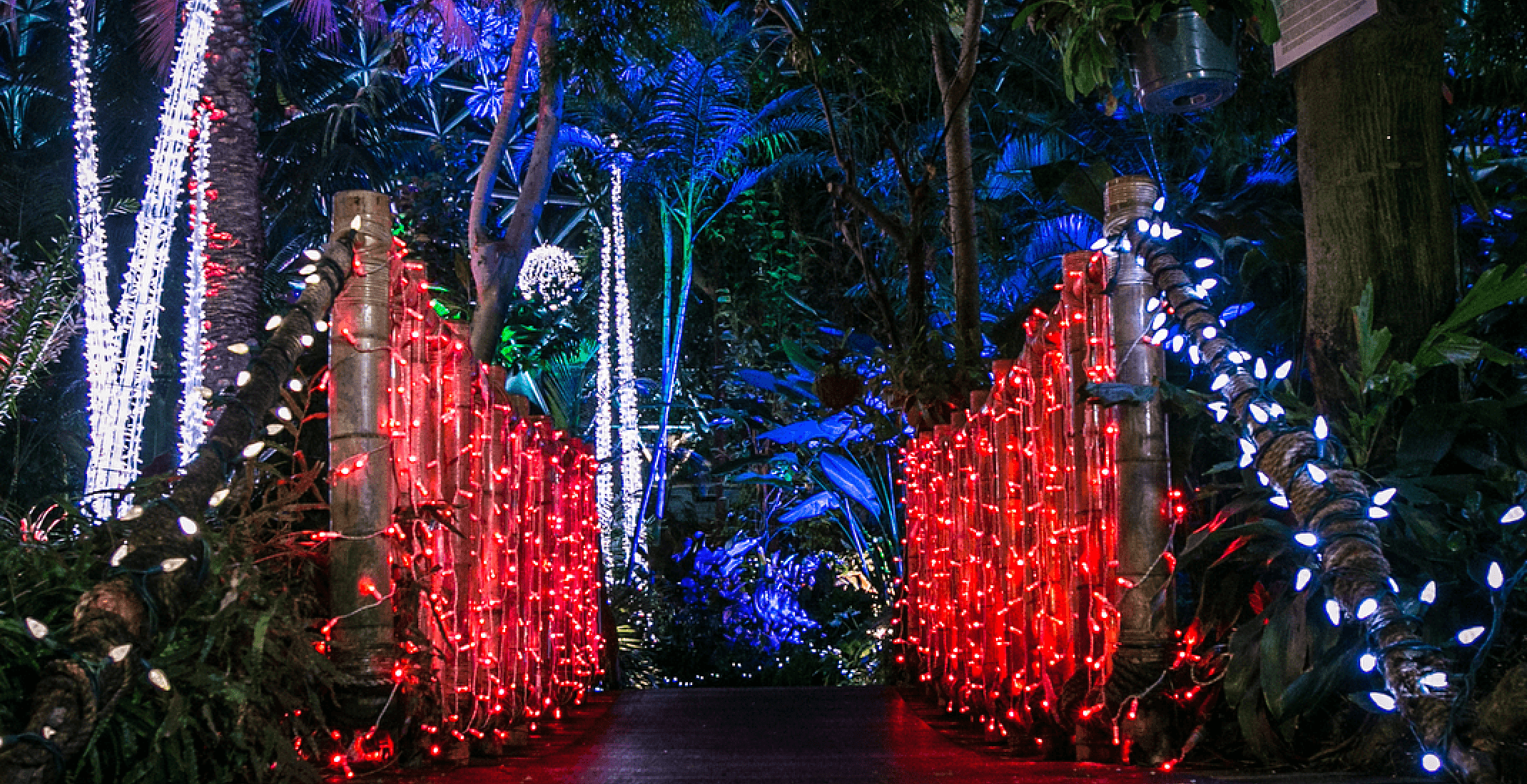 Vancouver's Bloedel Conservatory turns into a tropical holiday wonderland this month