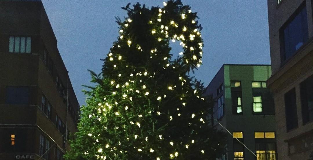 Ugly christmas tree ticklish