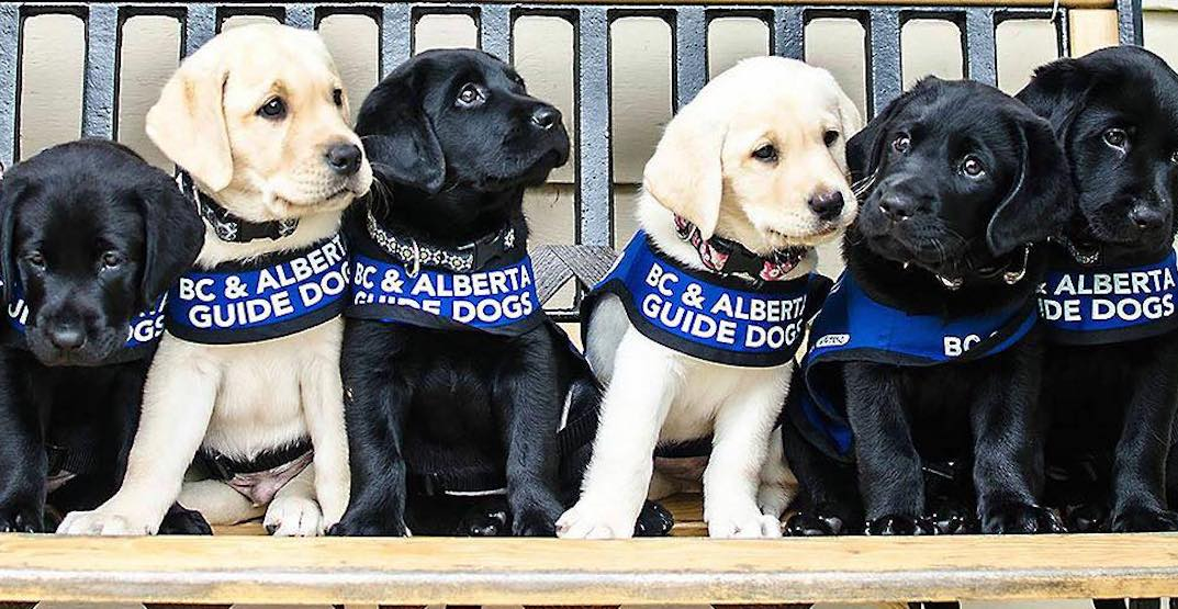 Alberta Guide Dogs hosting Christmas market and bake sale