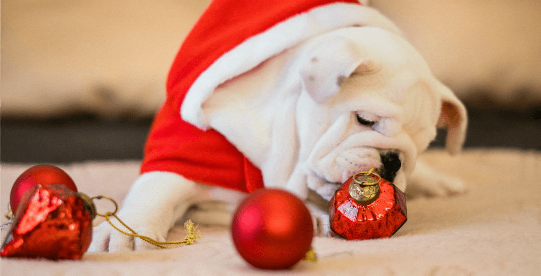You can bring your pets to see Santa Claus at Capilano Mall