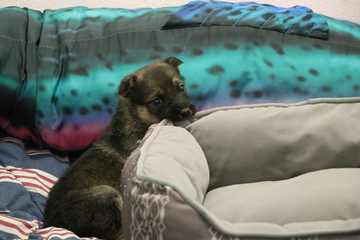 Puppies rescued after being abandoned in Costco parking lot