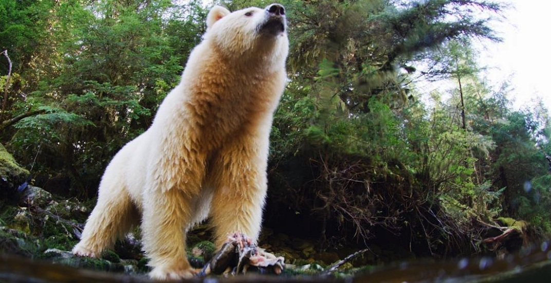 Science World hosting FREE showing of Ryan Reynolds' BC rainforest documentary