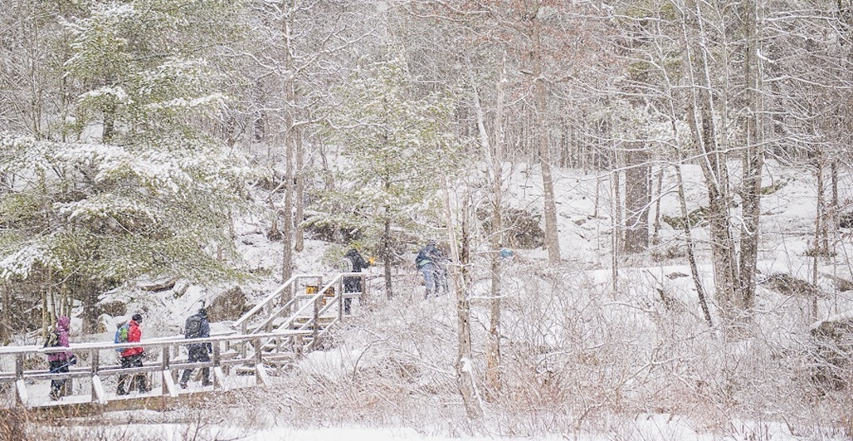 You can go on a New Year's Day hike at one of these provincial parks