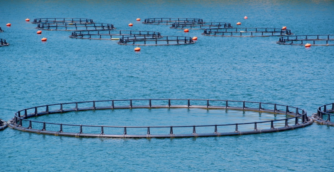 17 fish farms are being phased out in BC