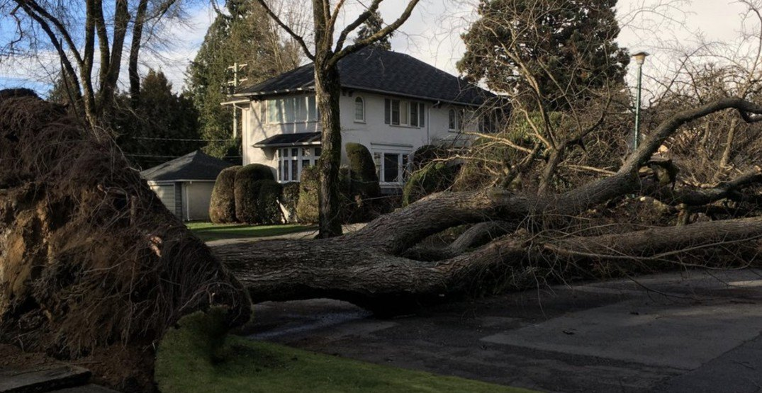 This is what the damage looks like from today's wind storm in Metro Vancouver (VIDEOS)