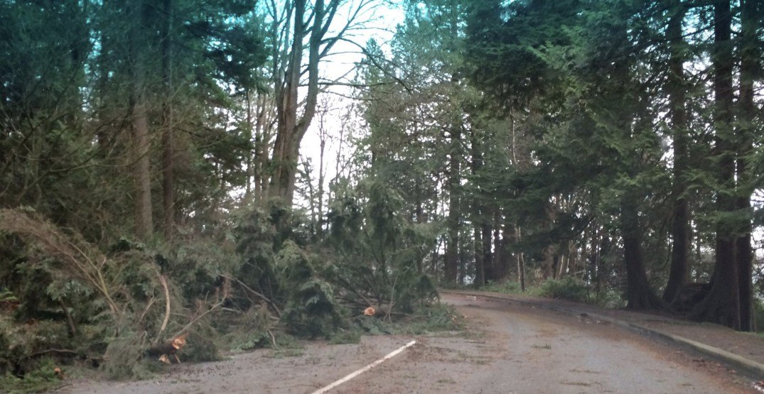 Stanley Park and VanDusen Gardens closed due to wind storm