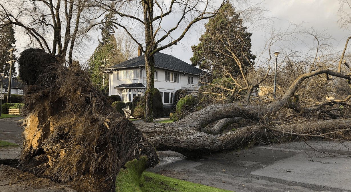 Wind gusts reached 121 km/h during today's wind storm