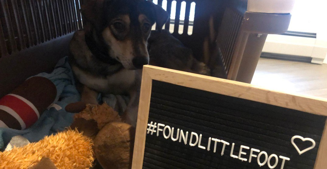 Missing Vancouver dog tracked down in Richmond a month later