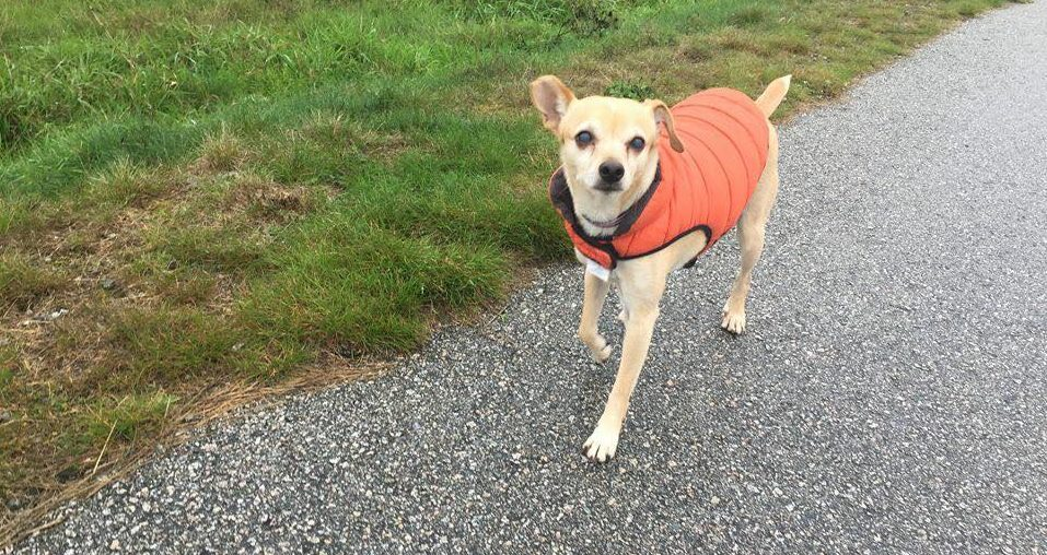 Adopt Me: Lucky 'the easiest dog ever' needs a second chance