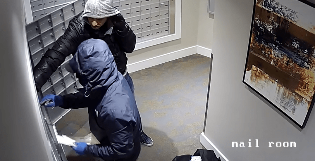Prolific Burnaby mail thieves clear out 100 mailboxes in minutes (VIDEO)
