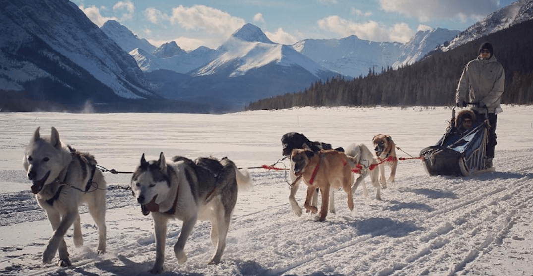 Here's where you can go for a starlit dogsled ride in Alberta this winter