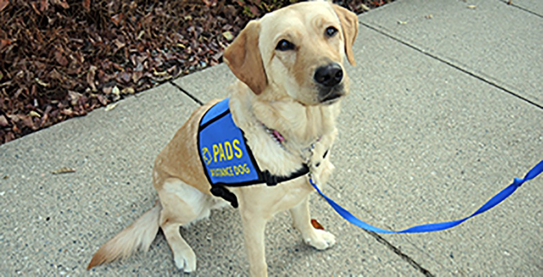 Surrey RCMP announce adorable addition to their Victim Services Unit