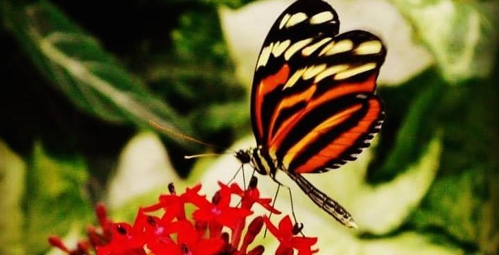 Butterflies botanical gardens montreal