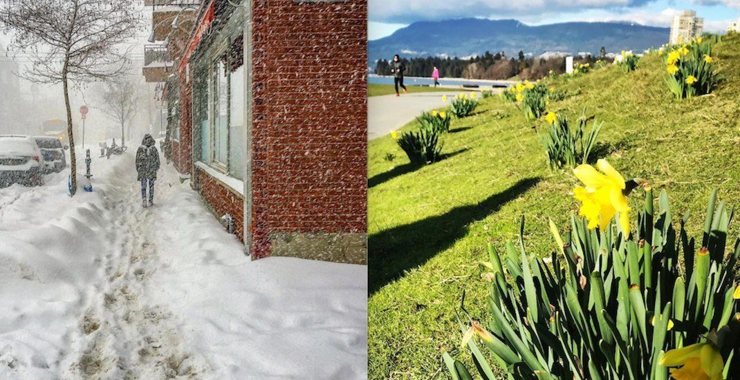 Spring flowers are blooming in Vancouver while the rest of Canada freezes