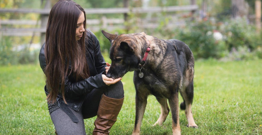BC SPCA launches program to accredit humane dog trainers
