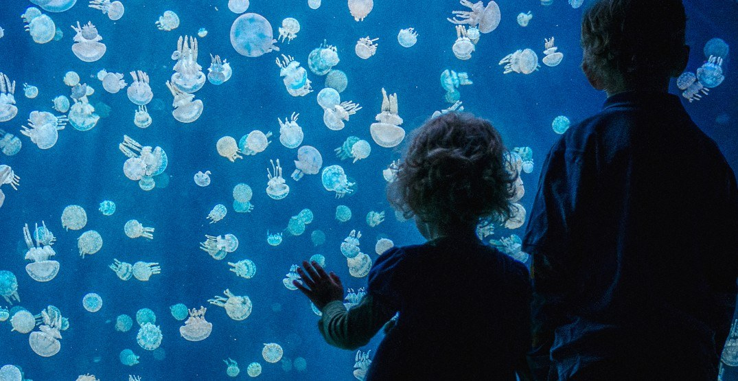 Kids get free admission at Vancouver Aquarium on Family Day
