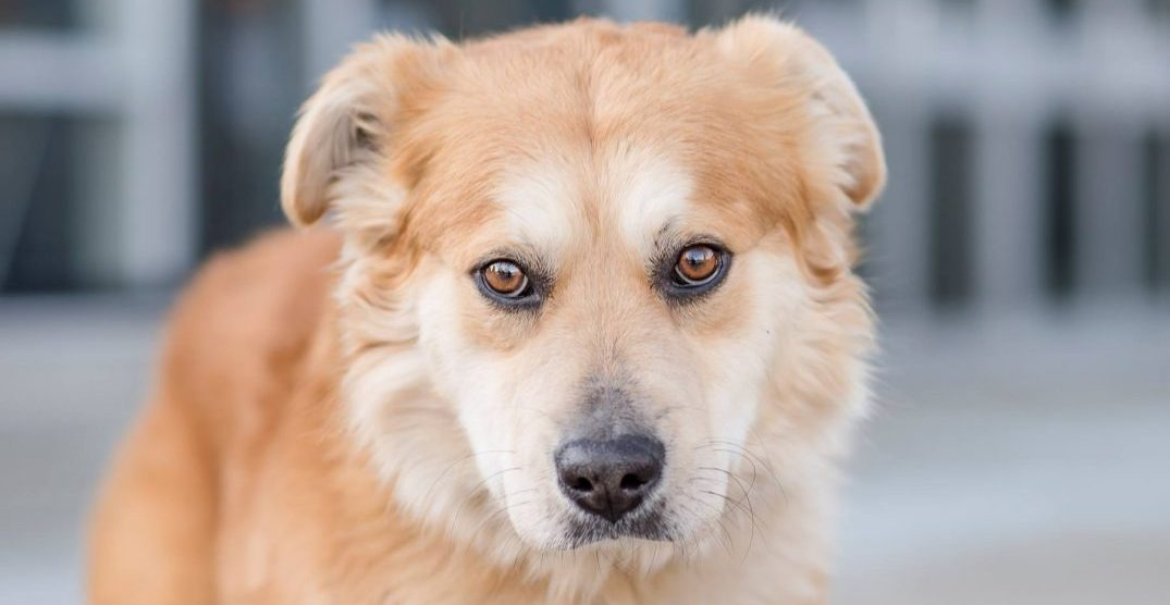 Our adoptable animal of the week: Duck the dog