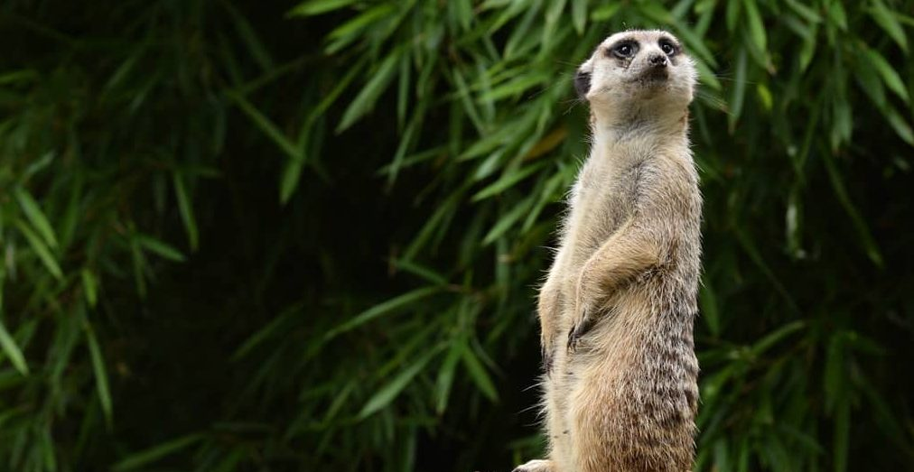 Name a cockroach after your ex and this zoo will feed it to meerkats on Valentine's Day