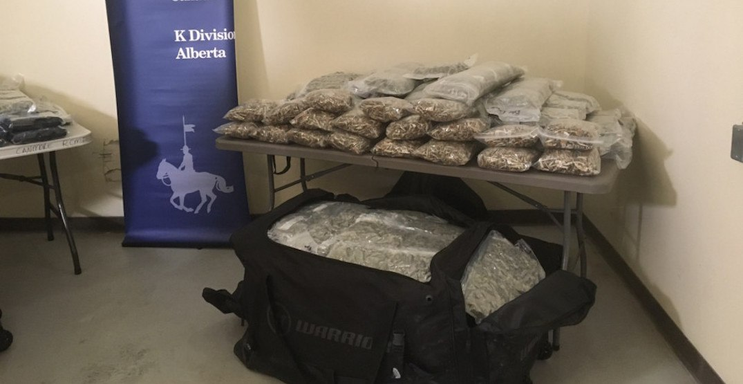 Police in Banff seize 326 pounds of pot during traffic stop