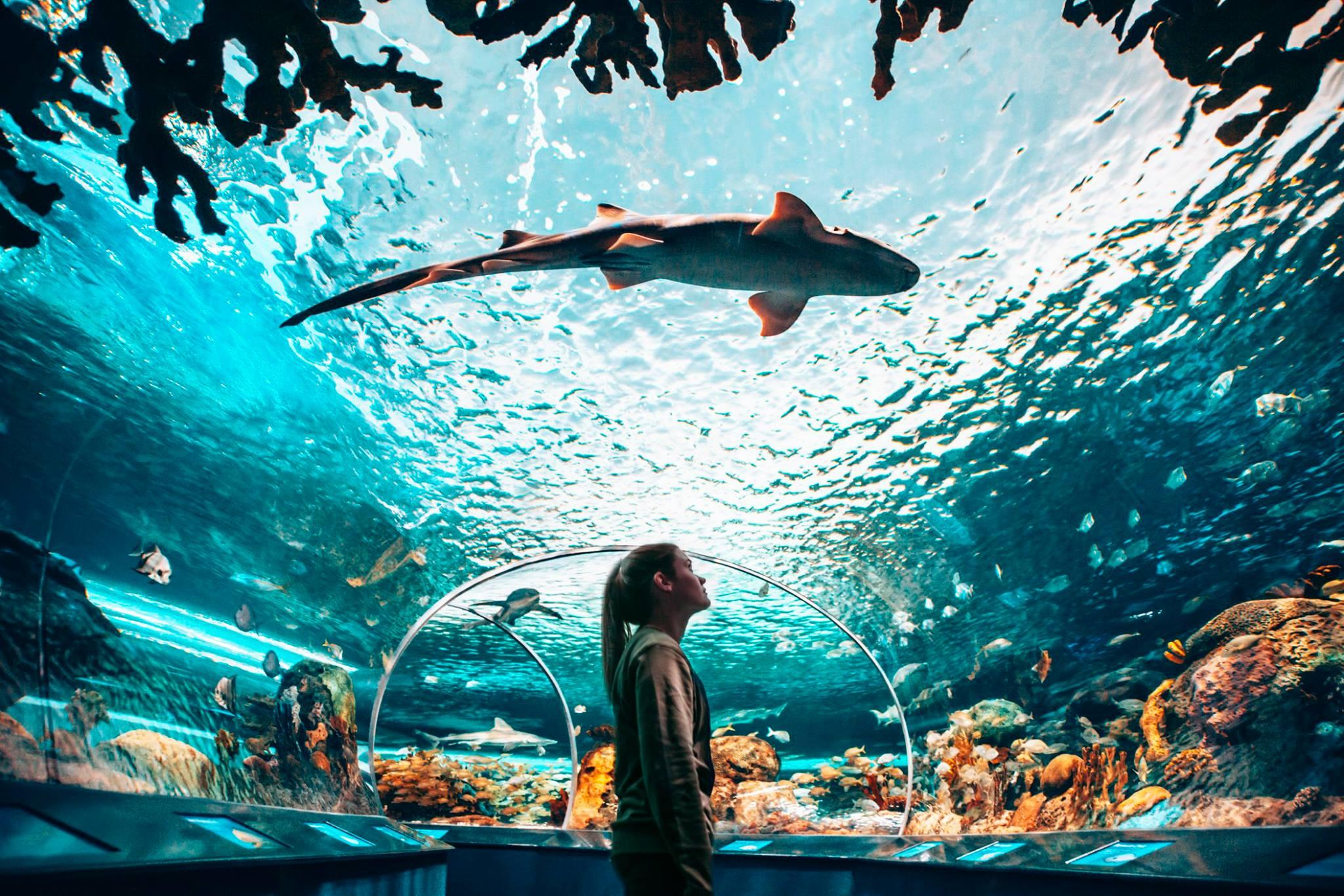 Ripley's Aquarium in Toronto is shining a light on ocean ...