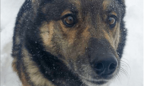 Group wants Canadian snare ban after family dog killed in 'noose' trap