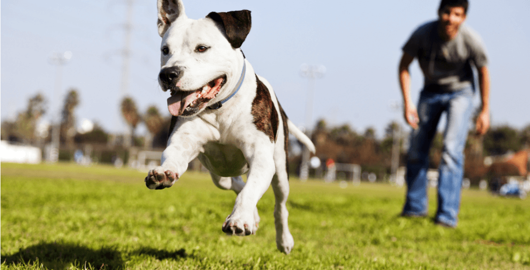 The dog-lover's guide to life in North Surrey
