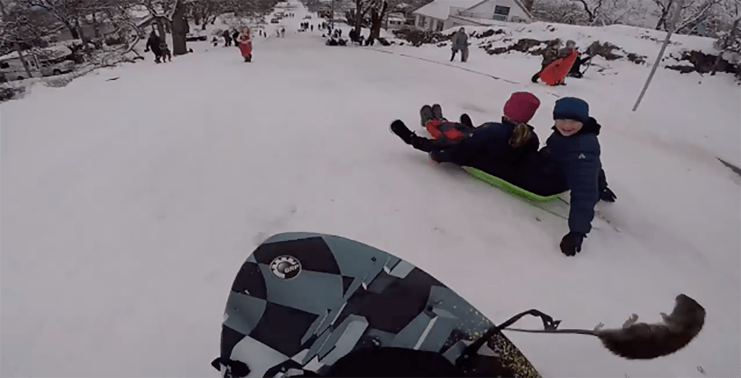 Sledder collides with rat on snowy hill in Victoria (VIDEO)