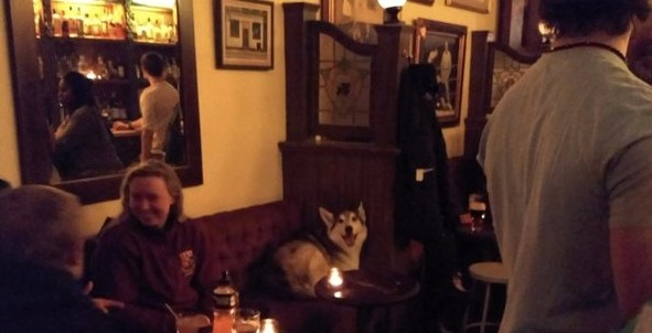 Smiling dog spotted in Montreal pub inspires funny pickup lines on social media