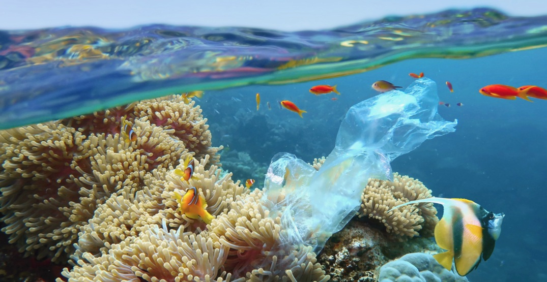Coral reefs around the world are in grave danger and here's why