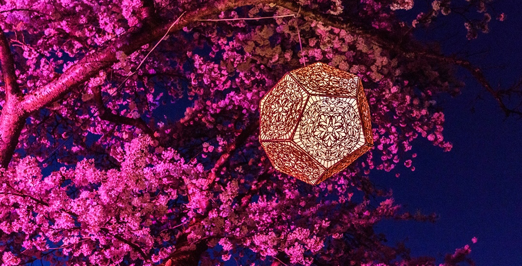 A brand new art installation is bringing 250,000 cherry blossoms to Metropolis at Metrotown