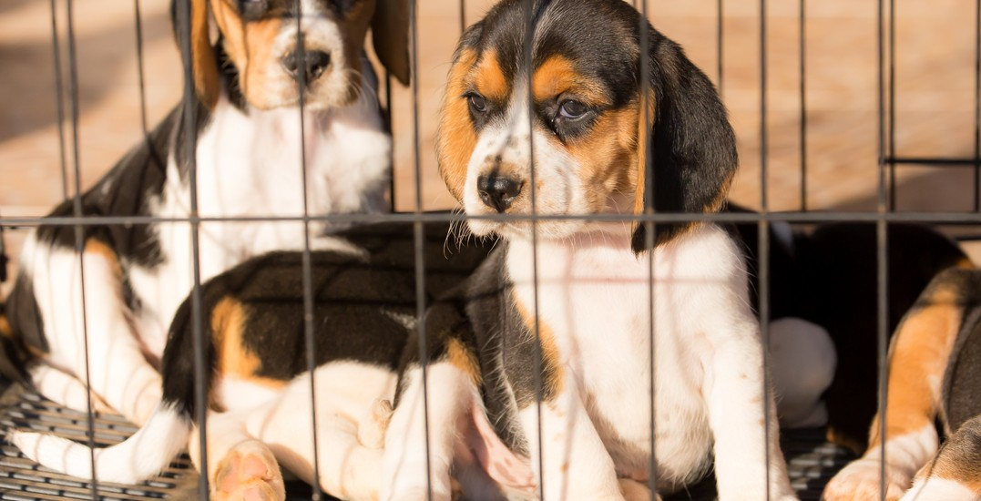 The dark side of dog rescue: Red flags every adopter should know about