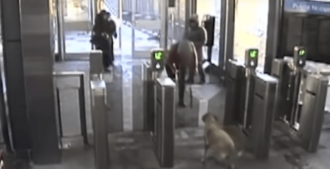 Toronto transit riders use dogs, bags and children's PRESTO cards to avoid paying (VIDEO)