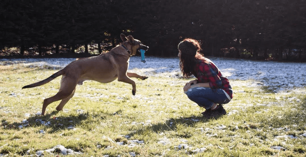 Opinion: Why I think using a shock collar on my dog is the right choice