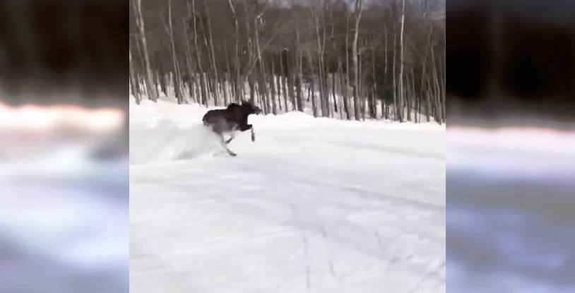 Moose snowboard ski hill