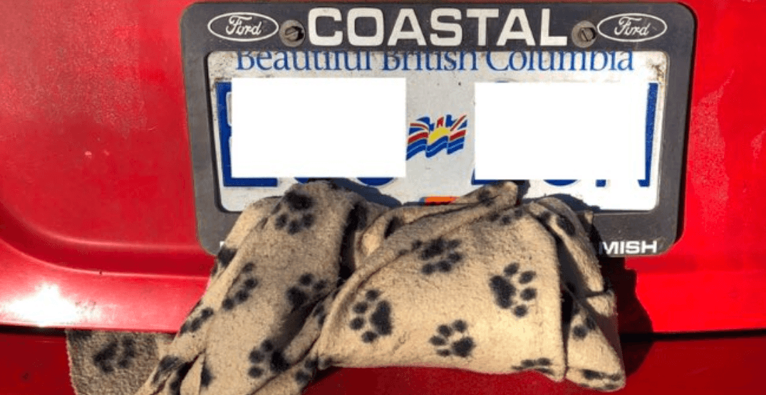 'Irresponsible motorist' tries to hide expired insurance tag under blanket