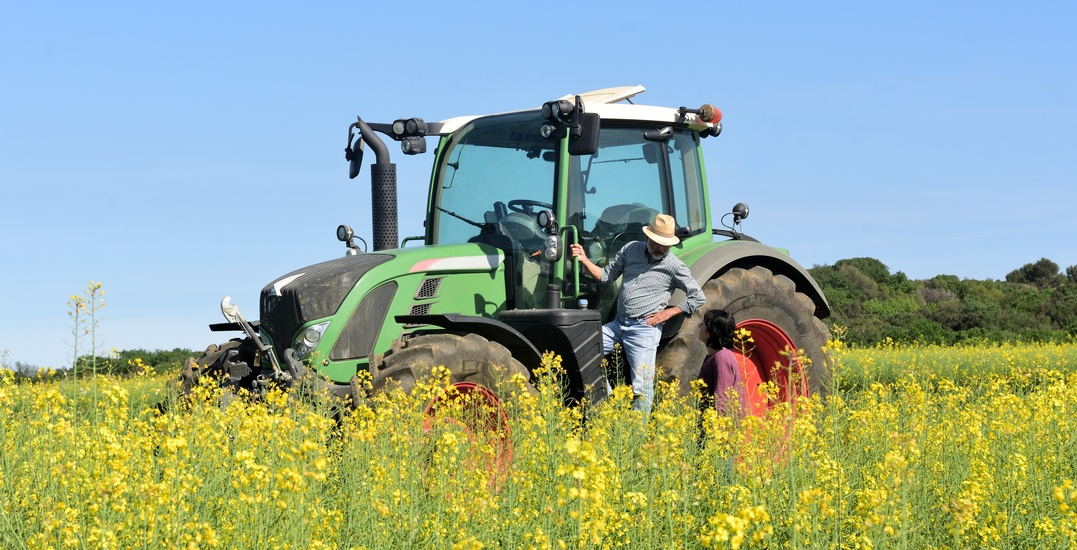 Notley calls on feds to stop 'naval-gazing' and end China's canola oil ban
