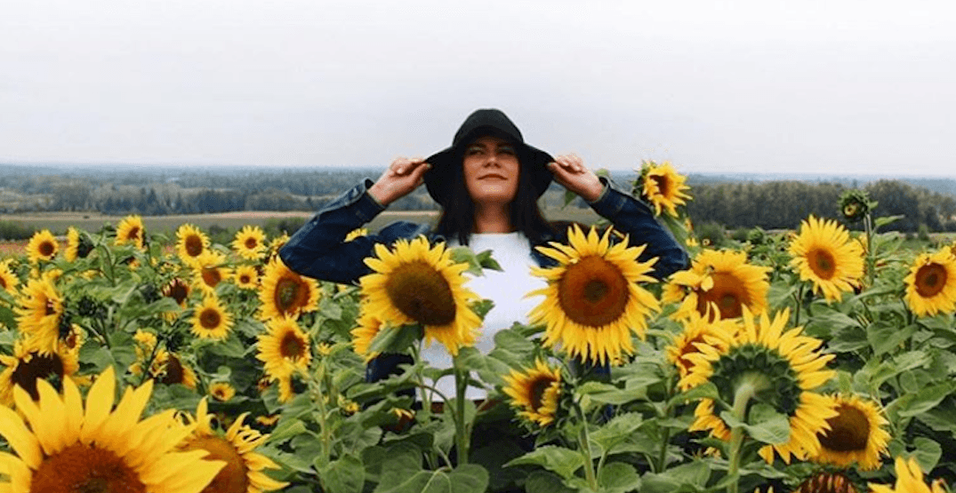 This stunning sunflower maze needs to be on your 2020 bucket list