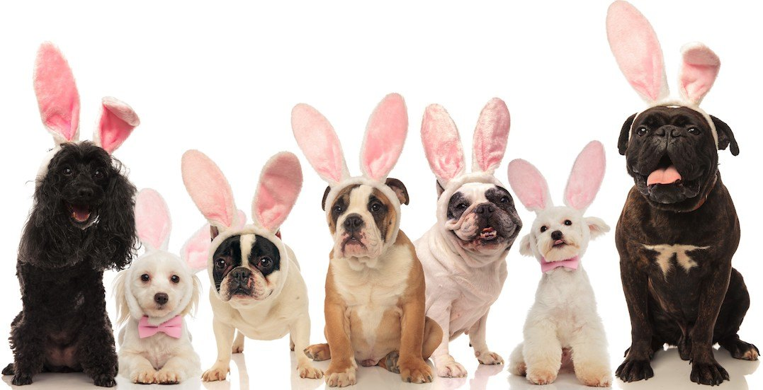You can bring your dog to this huge Easter-themed dog festival this April