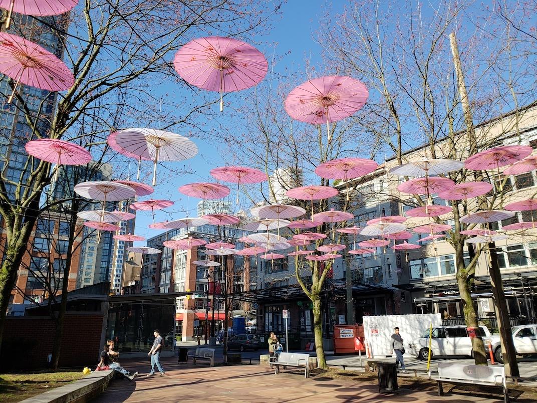Yaletown cherry blossom umbrella art