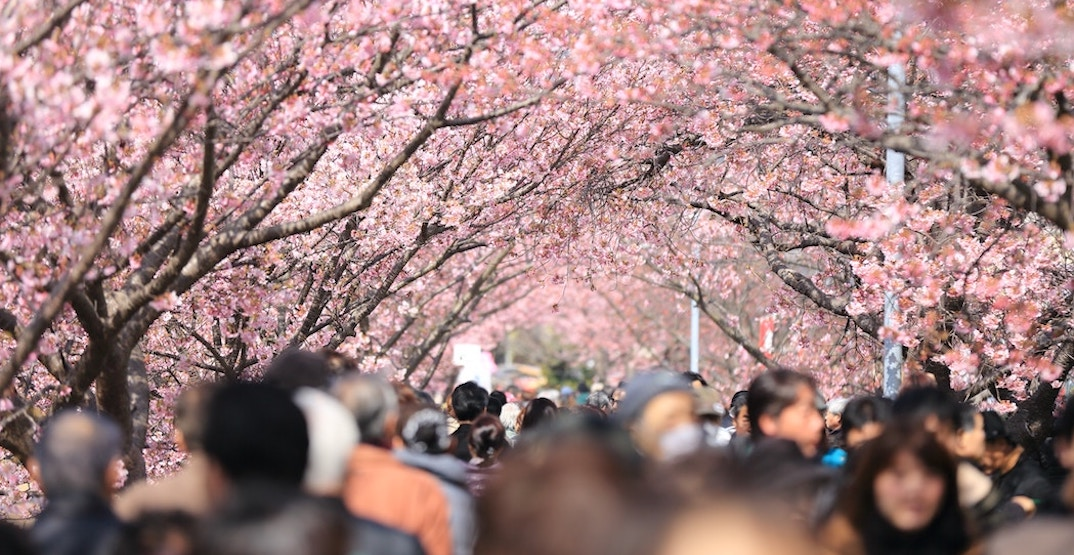 The most picture-perfect places to experience cherry blossoms in the world