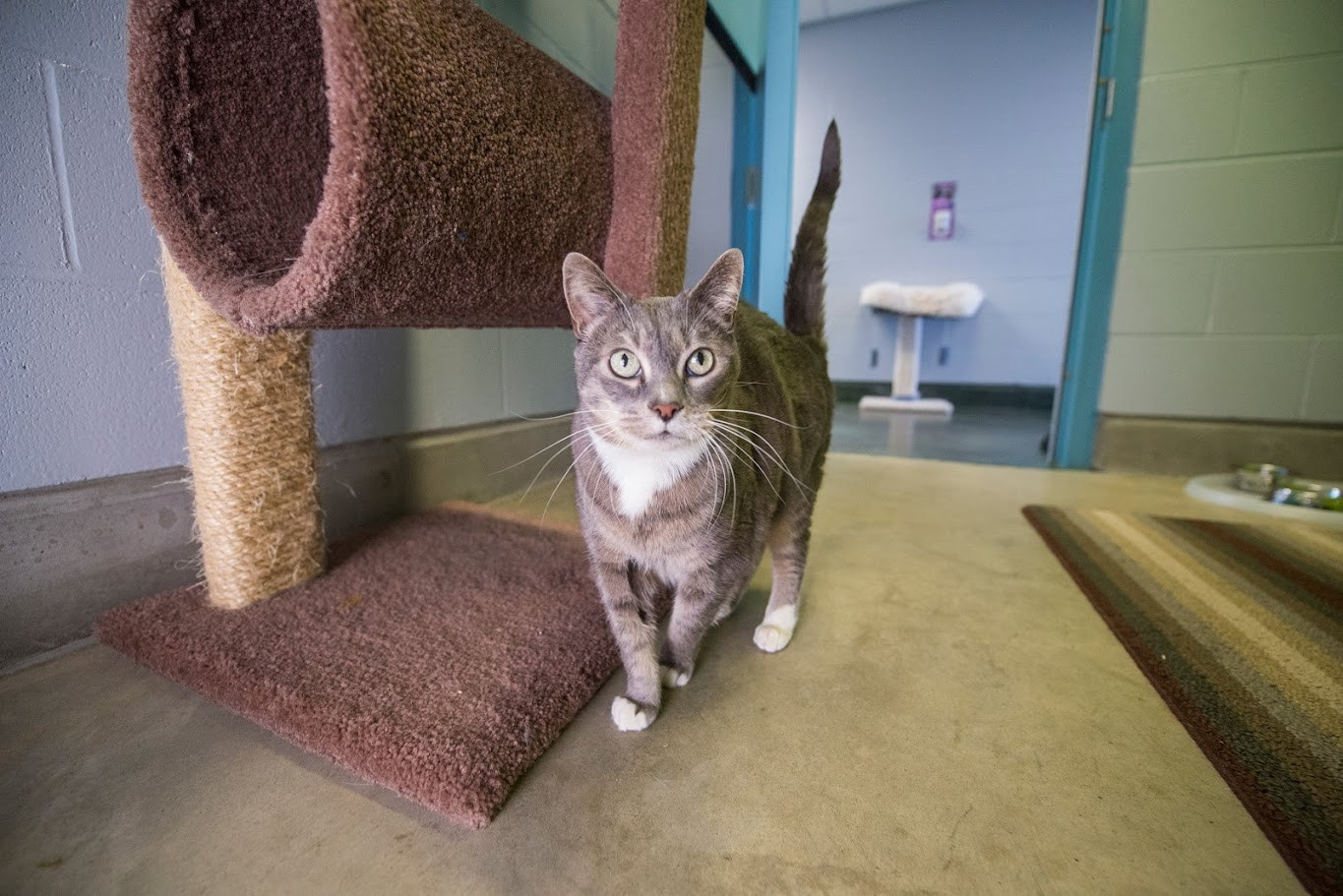 Adopt Me: Senior cat in shelter for 543 days and counting (VIDEOS)