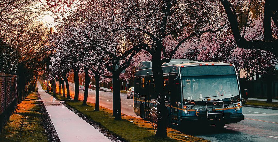 22 gorgeous shots of cherry blossoms starting to bloom in Vancouver (PHOTOS)