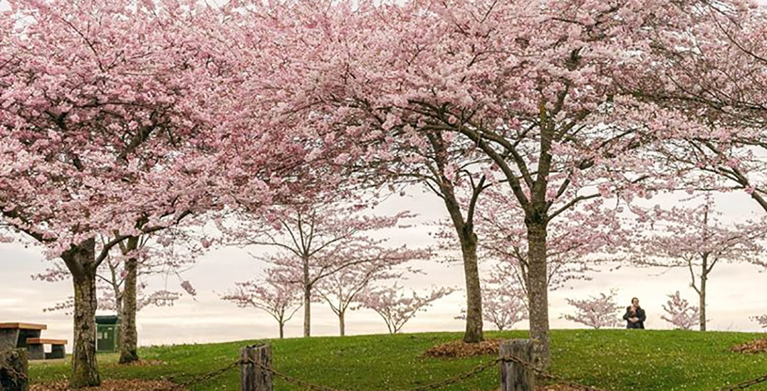 Get your cameras ready for the BC Blossom Photo Watch